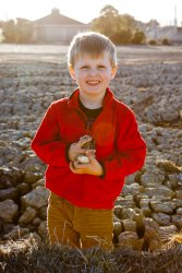 Will with shells 2