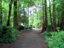 Trail through Stanley Park