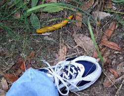 Big Banana Slug
