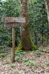 Signs at the coffee plantation