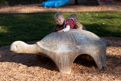 William climbing on the turtle
