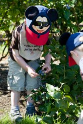 Will picking blueberries