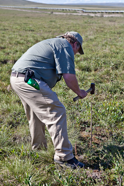 Tour guide Mike hammers rebar into the ground to see how down the permafrost layer is